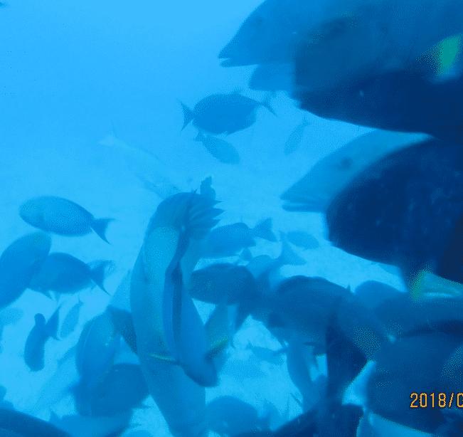 غواصة الحيتان في مالي